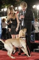 Jennifer Aniston luce increible en la premier de Marley & Me