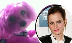 Emma Watson pintó a su perrito de rosado? WHAT?