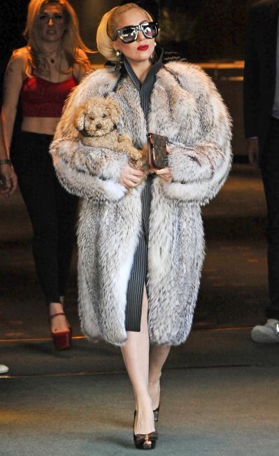 Lady Gaga dice que puede llevar pieles si quiere