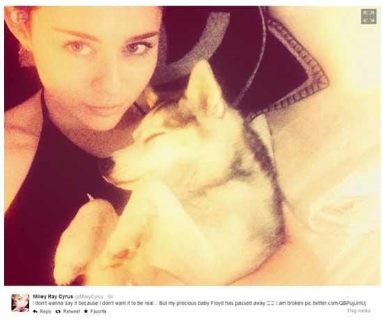 Miley Cyrus llora la muerte de Floyd - Posa en un caballo blanco