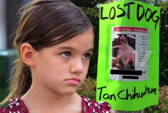 Suri Cruise perdió a su perrito Chihuahua