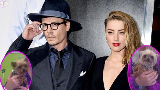 Mataran a los perritos de Johnny Depp en Australia!? WHAT?