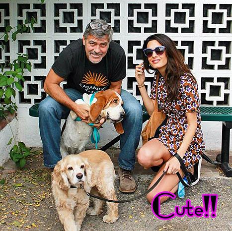 George Clooney y Amal adoptan un perro!