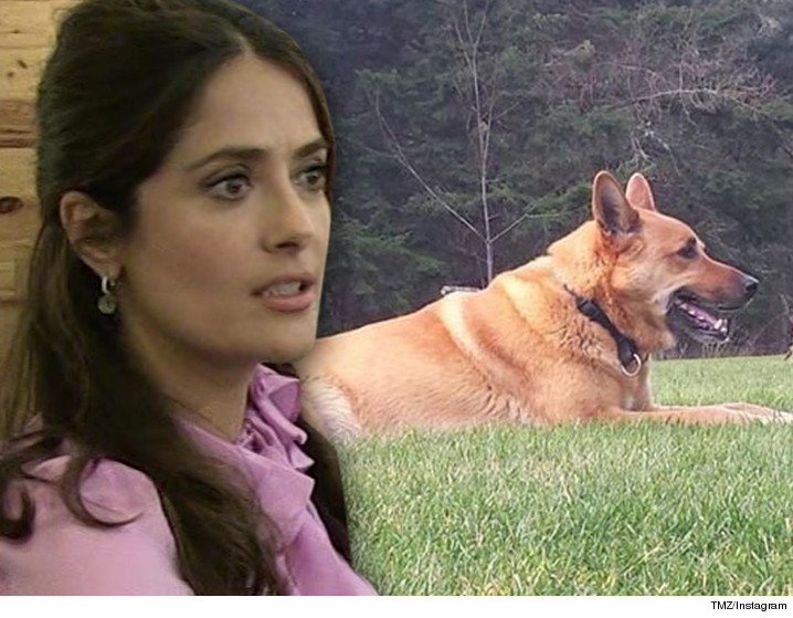Un vecino mata al perro de Salma Hayek