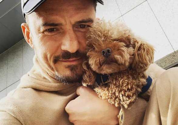 Orlando Bloom perdió a su perrito Mighty