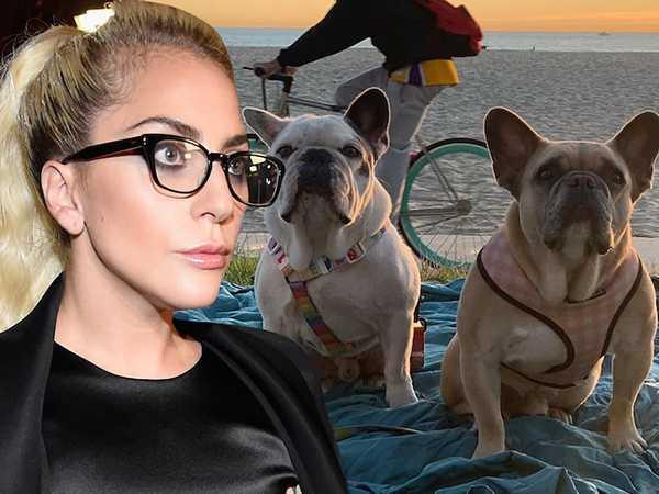 Lady Gaga aún no paga la recompensa por sus perritos