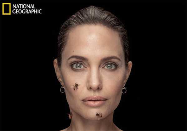 Angelina Jolie cubierta de abejas para National Geographic